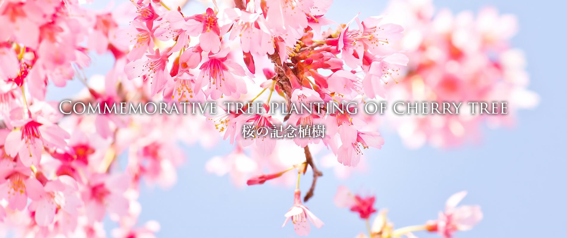 桜の記念植樹